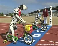 waptrick.com Funny Dogs on Tricycles - Guinness World Records Classics