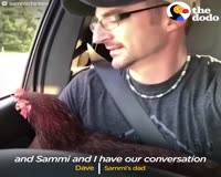 waptrick.com Swimming Chicken Helps Dad Cope with Losing His Best Friend