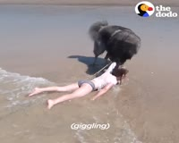 waptrick.com Dog Saves His Little Girl From The Ocean