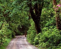 Wood Road In County Galway