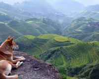 Mountain Landscape And Dog