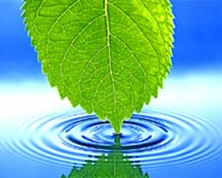 leaf touching water